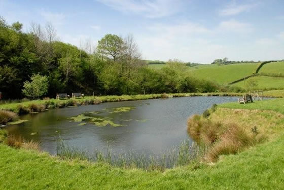 Our pond is ideal for those seeking a quiet fishing holiday